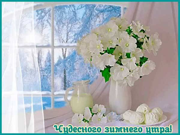 белые розы на зимнем окне