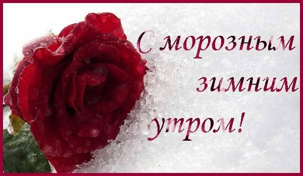 алая роза на снегу