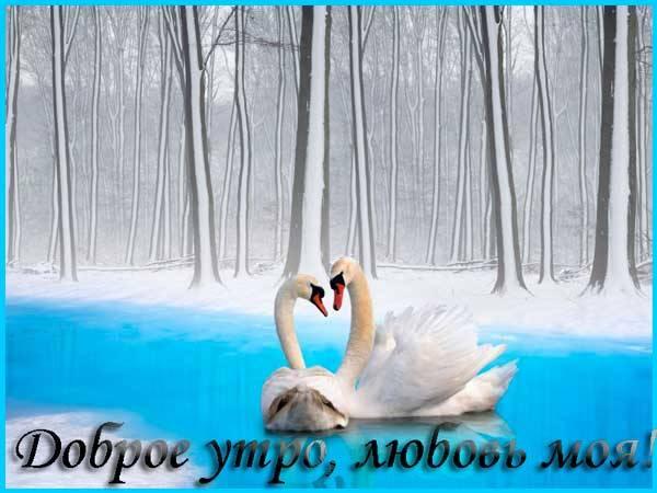 лебеди зимой