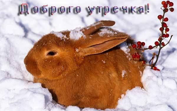 прикольный заяц