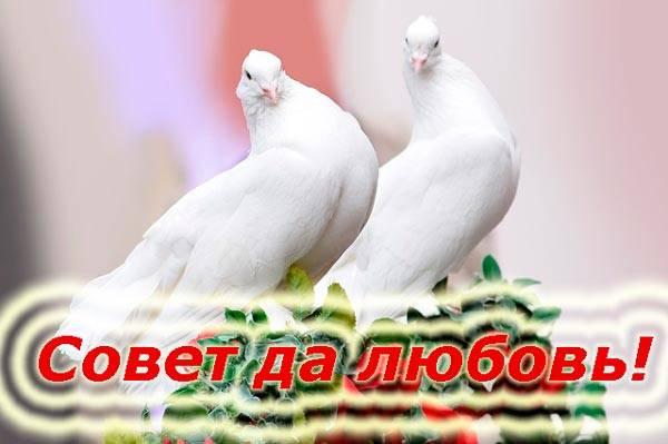 голуби и пожелание любви