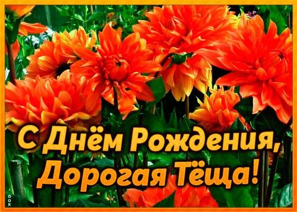 хризантемы для тещи