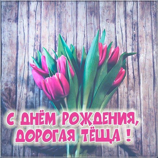 тюльпаны теще