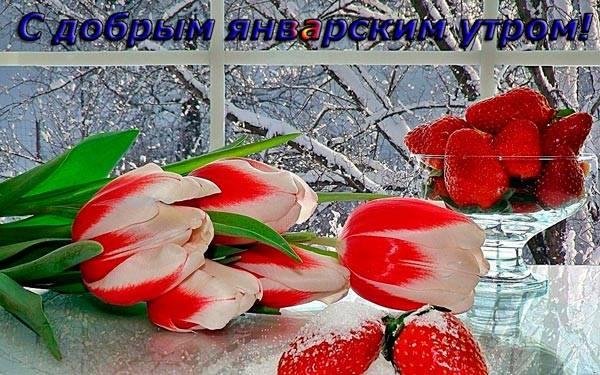 тюльпаны в январе