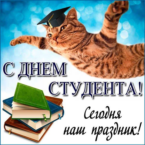 прикольный кот-студент