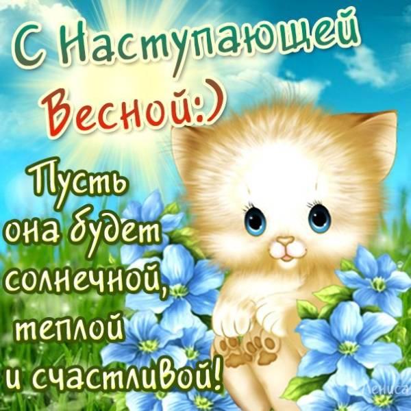 смешной котенок с поздравлением