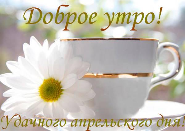 ромашка и чашка с чаем